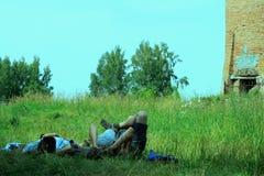 Stag på gräset Arkivbild