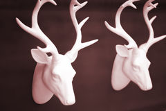 Stag's head antlers on wall Royalty Free Stock Photos