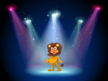 A stage with a brave lion in the middle Stock Image