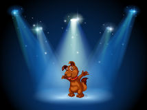 A stage with a dog in the middle Royalty Free Stock Photos
