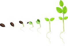 Stage of growth of plant Stock Image