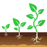 The stage of growth of a sprouts Royalty Free Stock Photos
