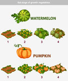 Stage of growth vegetables. Watermelon and Pumpkin Stock Photo