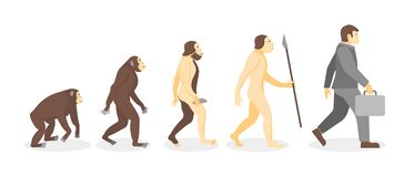 Stage of Human Evolution from Monkey to Businessman. Vector. Cartoon Stage of Human Evolution from Monkey to Businessman Development Concept Flat Design Style Stock Photo