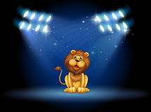 A stage with a lion at the center Royalty Free Stock Photo