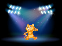 A stage with a playful cat Stock Photography