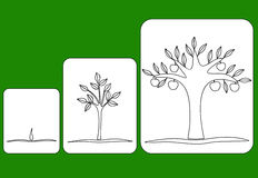 Stage of tree growth from seed to fruiting tree. Three stages of tree growth from seed to fruiting tree Stock Photos