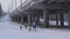 Stage of World Cup skijoring in Karelia stock footage