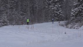 Stage of World Cup skijoring in Karelia republic stock footage