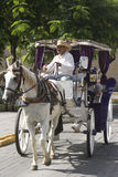 Stagecoach in Guadalajara Royalty Free Stock Photo