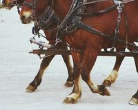 Stagecoach horses. Wild West horses pulling stagecoach Stock Image