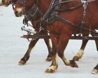 Stagecoach konie obraz stock
