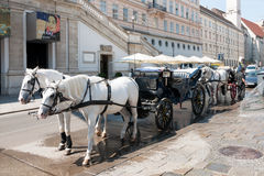 Stagecoach with white hourses in Vienna Stock Images