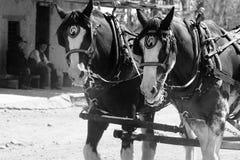 Stagecoachpferdenankommen Stockfotos
