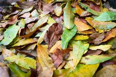 Stages covered with autumn foliage Stock Image