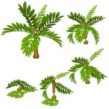 Stages of damage tropical plants isolated on white background. Deforestation. Vector cartoon close-up illustration. Stages of damage tropical plants isolated on Stock Image