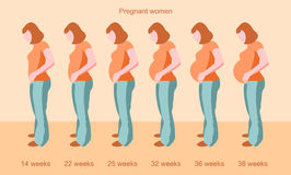 Stages of female pregnancy Stock Photo