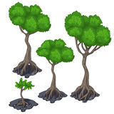 Stages of growing tropical tree, four icon Royalty Free Stock Image
