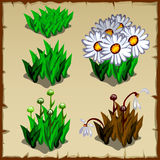 Stages of growth daisies, from planting to Royalty Free Stock Photos