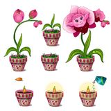 Stages of growth of magical pink flower with face Stock Photography