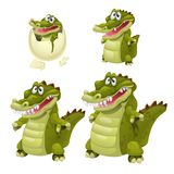 Stages of growth and maturation of crocodiles isolated on white background. Vector cartoon close-up illustration. Stages of growth and maturation of crocodiles Stock Images