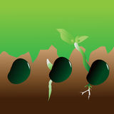 Stages of growth of plant Stock Photo