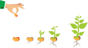 Stages of growth of plant and seed to tree Stock Images