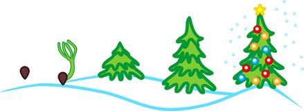 Stages of growth of spruce from seed to Christmas tree with toys. New Year`s landscape. Stages of growth of spruce from seed to Christmas tree with toys vector illustration