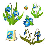 Stages of growth and wilting blue wildflowers Royalty Free Stock Photos
