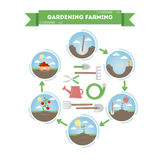 Stages of planting. Royalty Free Stock Image