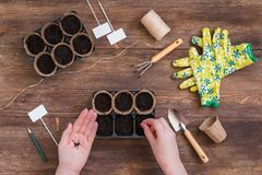 Stages of planting seeds, woman hands, gardeners tools and utensils royalty free stock photo