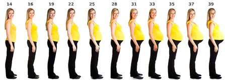 Stages of pregnancy. Woman in stages (weeks) of pregnancy isolated on white stock image
