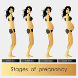 Stages of Pregnancy beautiful girl Royalty Free Stock Photo