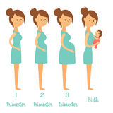 Stages of pregnancy Stock Images