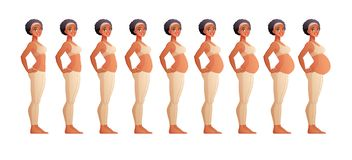 Stages of pregnancy month by month. Isolated vector illustration. vector illustration