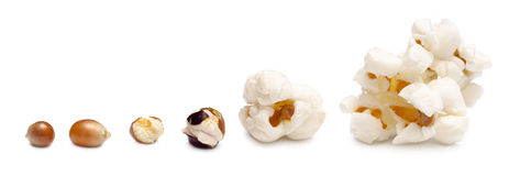 Stages of preparation of popcorn. Grains of corn are isolated on a white background Stock Images