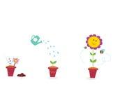 stages trädgårds- tillväxt för blomma solrosen Arkivfoto