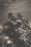 staghorn de jardins de corail de cerveau Photos libres de droits
