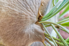 Staghorn Fern Closeup Immagine Stock