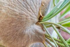 Staghorn Fern Closeup Stock Image