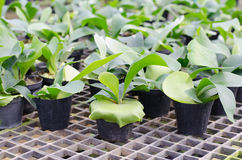 Staghorn fern Royalty Free Stock Images