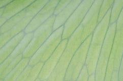 Staghorn蕨laves 免版税图库摄影