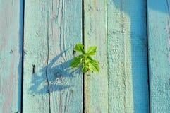 Stagionato una fine del recinto dipinta vecchio verde su Luce che splende sopra Fotografia Stock Libera da Diritti