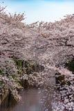 Stagione del fiore di ciliegia a Tokyo al fiume di Meguro, Giappone fotografia stock