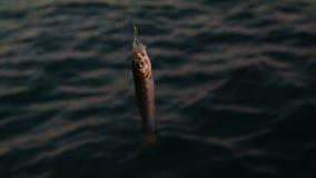 Stagione del pesce aperta video d archivio