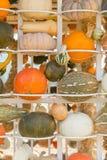 Stagione del raccolto della zucca sugli scaffali Fotografia Stock