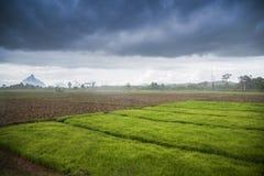 Stagione delle pioggie Fotografie Stock Libere da Diritti