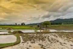 Stagione delle pioggie del giacimento del riso Fotografia Stock