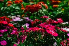Stagione di amore fioritura dei fiori dappertutto fotografia stock libera da diritti