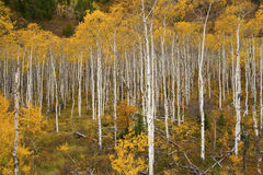 Stagione di autunno Fotografie Stock